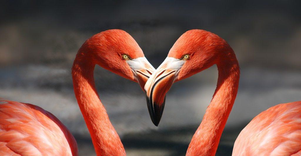 flamingo, valentine, heart-600205.jpg